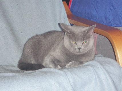 FOTKA - kočička 18