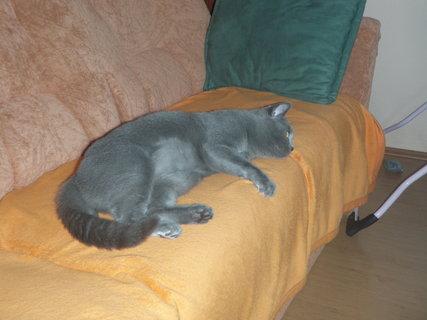 FOTKA - kočička 20