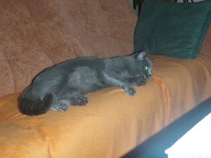 FOTKA - kočička 21