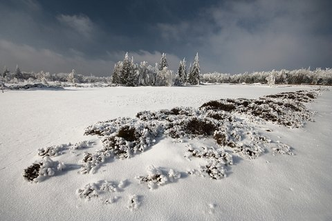 FOTKA - ..Georgenfelder Hochmoor