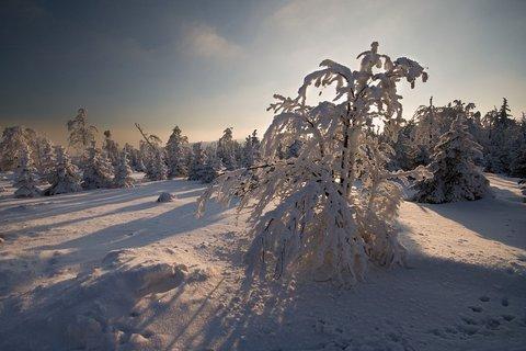 FOTKA - Zimní odpoledne