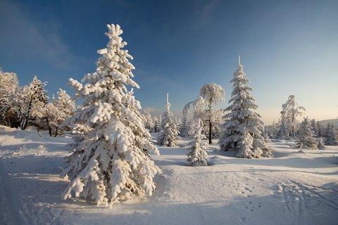 FOTKA - Zima na Cínovci