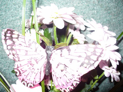 FOTKA - Motýlek jako živý