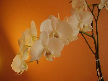 FOTKA - orchidej-....-