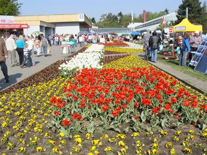 FOTKA - výstava květin