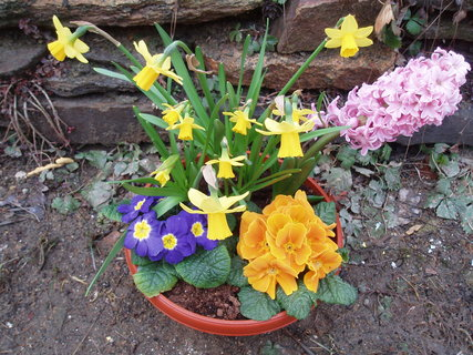 FOTKA - Jarní miska květin
