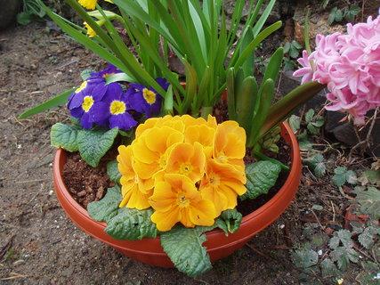 FOTKA - Jarní miska květin 1