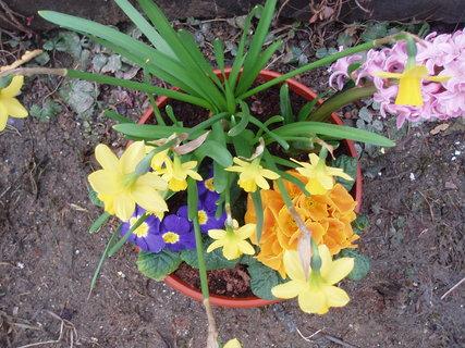 FOTKA - Jarní miska květin 2
