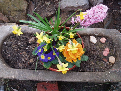 FOTKA - Jarní kytičky