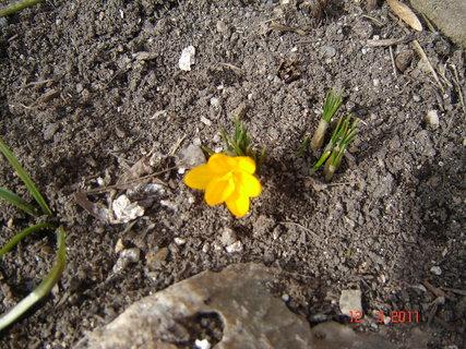 FOTKA - U nas taky jaro