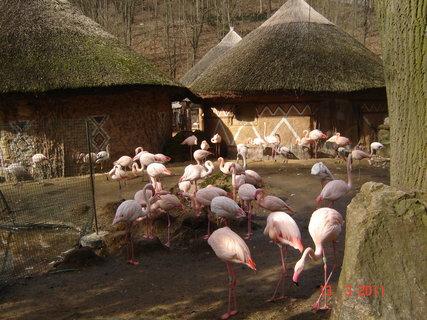 FOTKA - zoo Jihlava