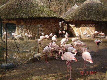 FOTKA - zoo Jihlava.
