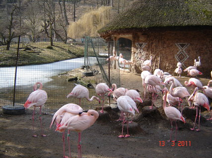 FOTKA - zoo Jihlava..