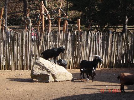 FOTKA - zoo Jihlava....