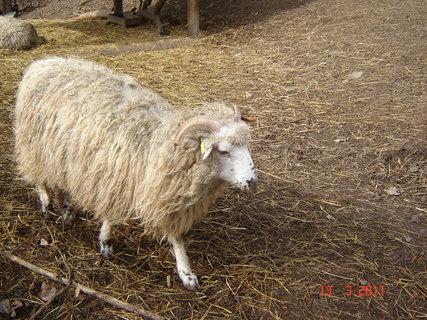 FOTKA - zoo Jihlava,