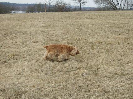 FOTKA - stopování ( pes je ve svém živlu:))