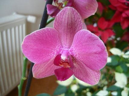 FOTKA - znovu orchidej 3