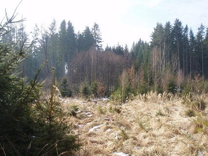 FOTKA -  . v lese