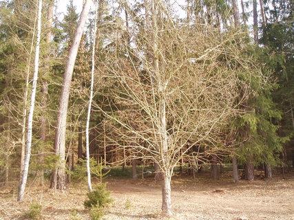 FOTKA -  . v lese .