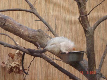 FOTKA - Zoo Jihlava,,,