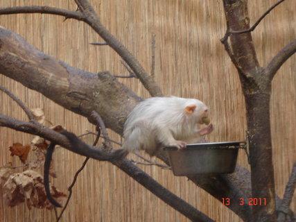 FOTKA - Zoo Jihlava,,,,,