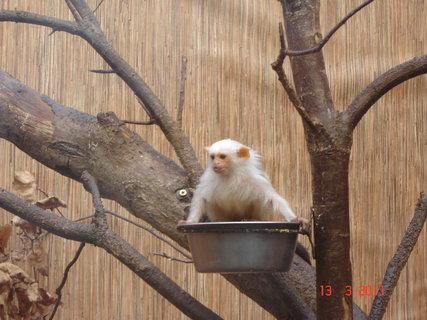 FOTKA - Zoo Jihlava,.