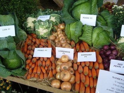 FOTKA - Výstava ovoce a zeleniny 27