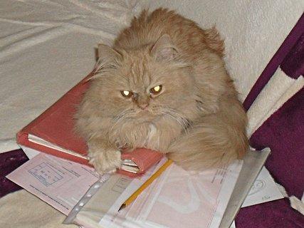 FOTKA - Garfield podnikatel