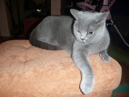 FOTKA - náš domácí mazlíček 1