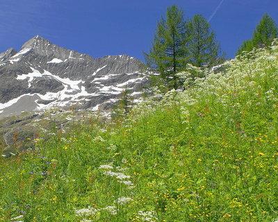 FOTKA - Jaro v Alpách