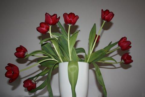 FOTKA - Tulip�n X.
