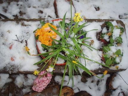 FOTKA - Jarn� kyti�ky 18.3.2011 .