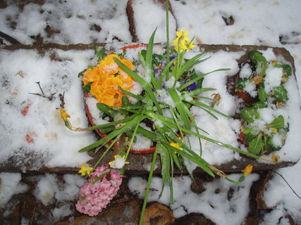 FOTKA - Jarní kytičky 18.3.2011 .