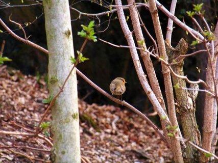 FOTKA - ptáček v lese..