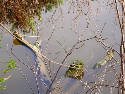FOTKA - utopený strom u břehu..