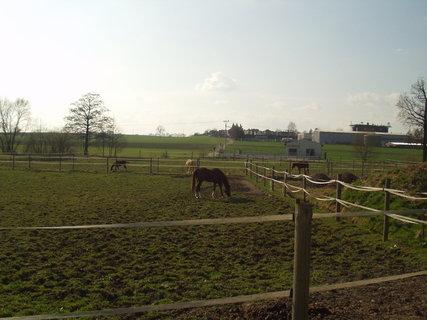 FOTKA - Koně ve výbězích