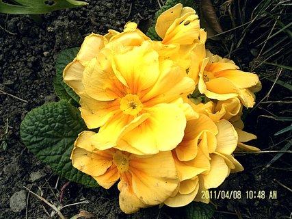 FOTKA - Trochu pošramocený, ale jinak to není květ ale plácačka na mouchy velikosti dlaně