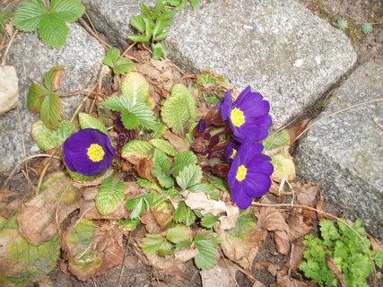 FOTKA - jarní květy