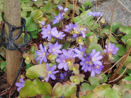 FOTKA - jarní květy . .