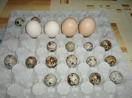 FOTKA - budu foukat vajíčka