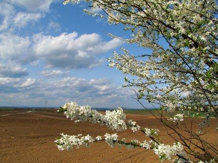 FOTKA - Bílé květy, pole a oblaka