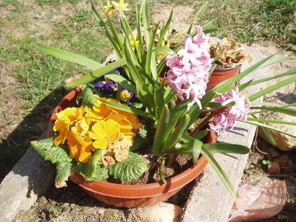 FOTKA - jarní květy .. .