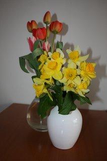 FOTKA - Tulipány a narcisky