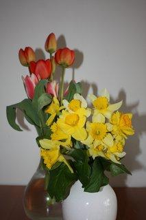 FOTKA - Tulip�ny a narcisky II.