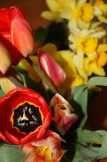 FOTKA - Tulipány XXI.
