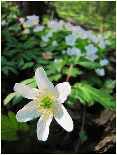 FOTKA - Květiny v rezervaci