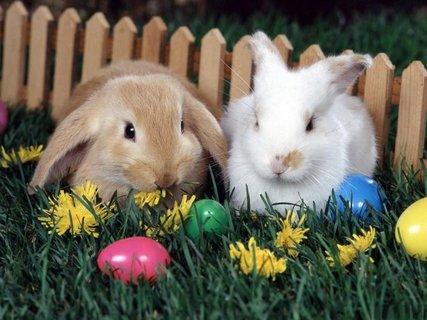 FOTKA - Byl jeden zajíček, co neměl vajíček, a tak pořád přemýšlel, co by pro Vás vymyslel.  Nakonec poslal přáníčko, co psalo jeho srdíčko, tohle to přání je a zajíček Vám přeje...  Šťastné, veselé Velikonoce a krásný každý den v roce.