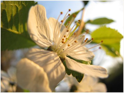 FOTKA - Detail bílého květu