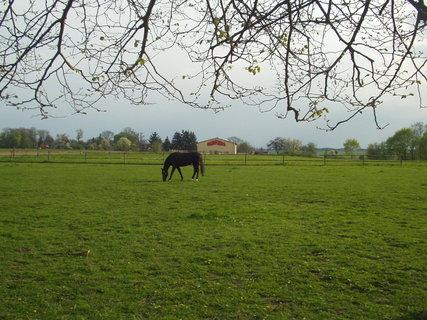 FOTKA - Koně ve výběhu 6