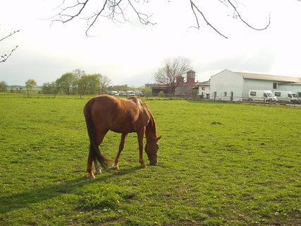 FOTKA - Koně ve výběhu 7
